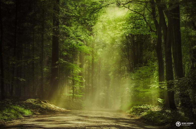Delightful - Zonnestralen vallen op het pad in Speulderbos.