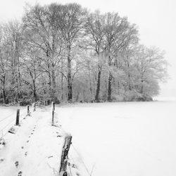 Sneeuwschap
