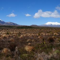 Nieuw Zeelands landschap