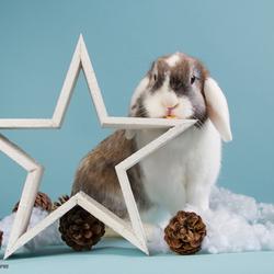 Pebbles 'kerst'