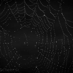 Nat spinnenweb