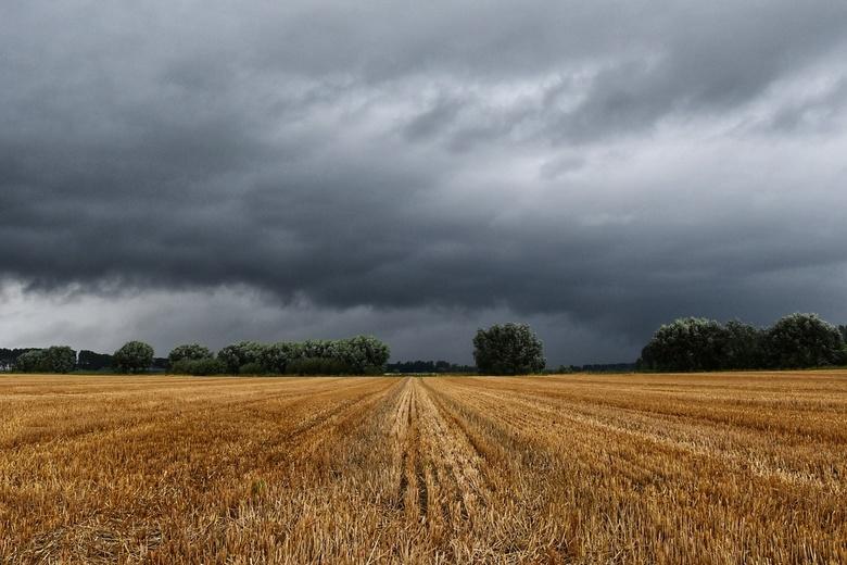 Cloudy field - Zeeuwse akker voor de regenbui.