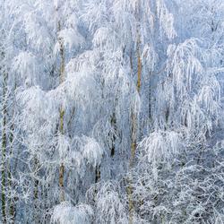 Winter rond Zwolle