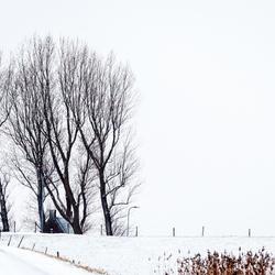 Bomen in de kou