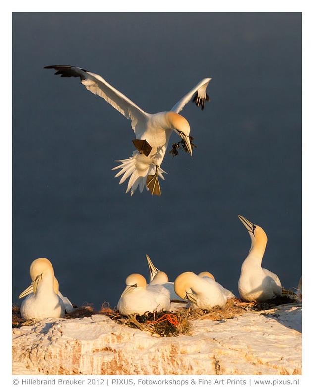 Jan van Genten - Ik kom al jaren op Helgoland. Om fotoworkshops te leiden, maar ook zelf lekker te fotograferen. Het verveeld er nooit. Zoveel verschi