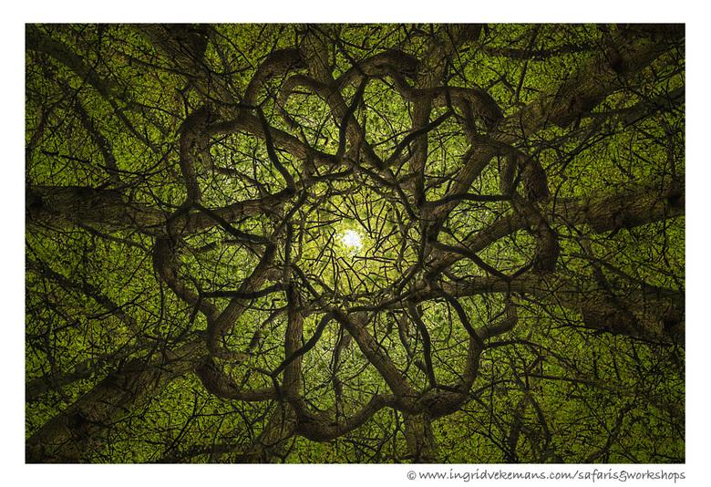 Tree Tops - Ben heel veel met meervoudige belichting LIGHT/DARK bezig sinds dit in veel nieuwe camera's aanwezig is. Hierbij wat boomkruinen, gef