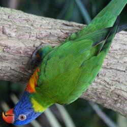 Kleine Costa Rica Someren