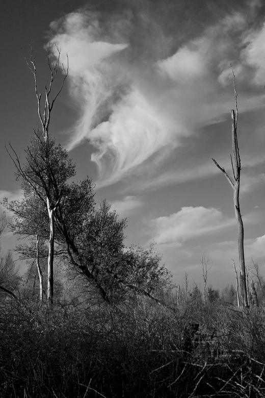 Oostvaardersplassen I - De trieste aanblik en mooie wolken moesten op de foto...