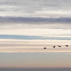 Lijnenspel met ganzen