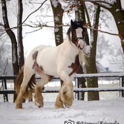Tinker in de sneeuw