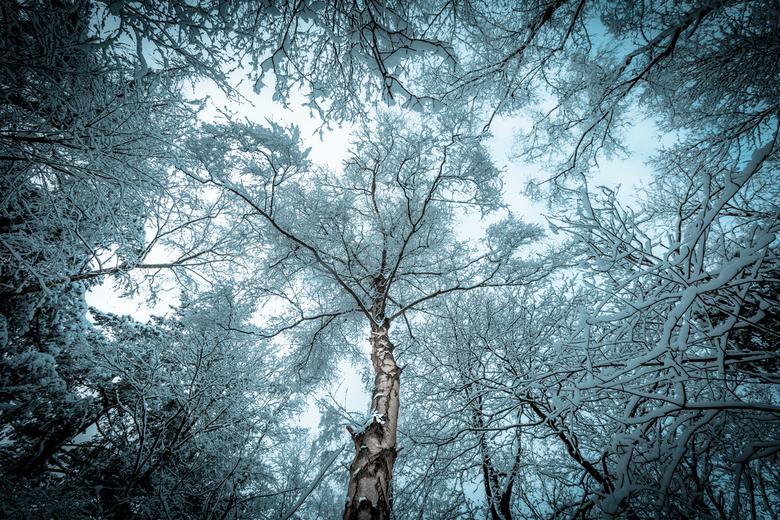 Late sneeuw - Een verloren foto van de afgelopen winter die in een verkeerde map terecht kwam...<br /> <br /> Eenvoudig maar toch spreekt hij mij pe