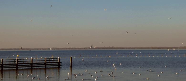 Meeuwen wereld - Je kijkt hier over het Gooimeer naar Almere aan de Horizon.<br /> <br /> Kort in de buurt was de boer aan het gieren, vandaar de me