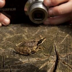 natuurfotografie in de praktijk
