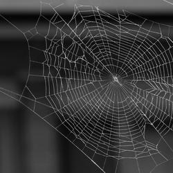 Spinnenweb in zwartwit