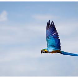 Ara fly-by