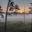 De mist in