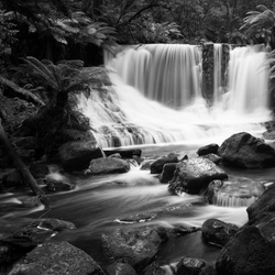 the beauty of nature in black and white I