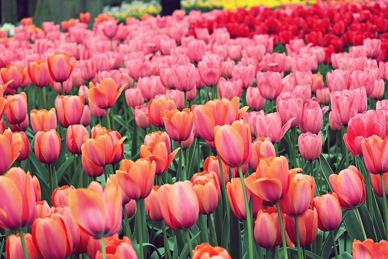Colourful spring -