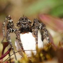 kleine spin met eicocon