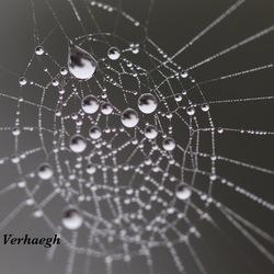 Druppel in de web