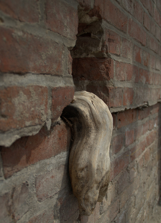 Boomwortel uit muur - Een boomwortel in de muur van de kelder van de voormalige kunstacademie en het SS hoofdkwartier in Berlijn.<br /> <br /> UITNO