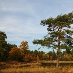 Een landschapje
