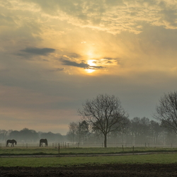 ochtendpaarden
