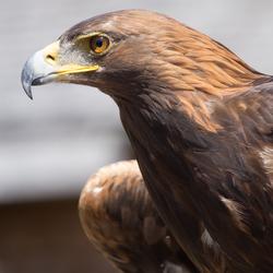 Roofvogelshow in Oostenrijk 2