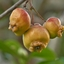 Appels voor de vogels
