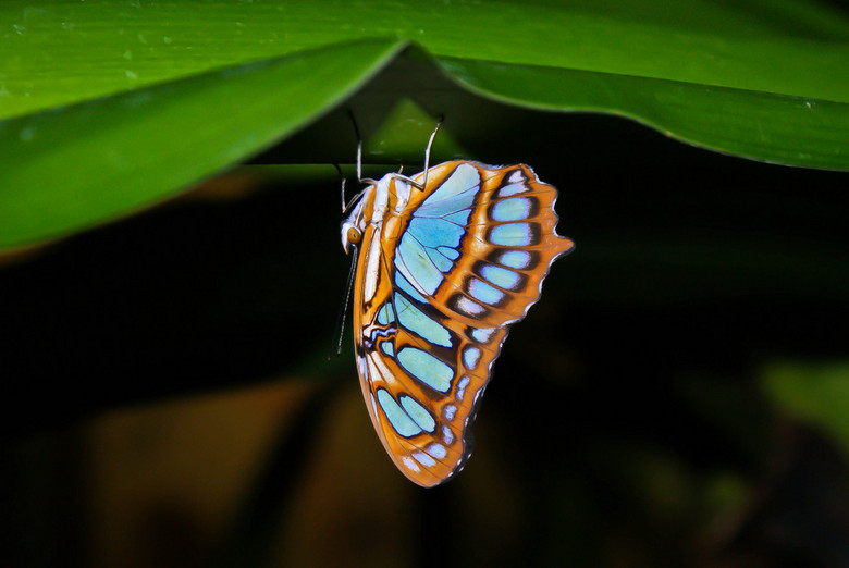 Vlinder - Mijn eerste foto met een spiegelreflexcamera in Artis genomen in de vlindertuin