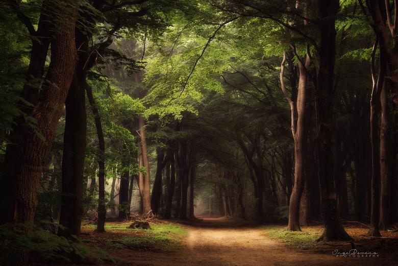 A Moment in Time. - Genomen in het mooiste bos van Nederland: het Speulderbos.