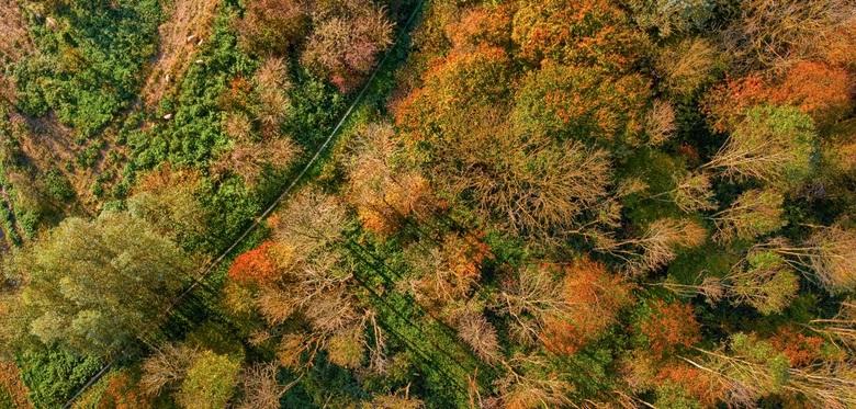 Herfstkleuren van boven
