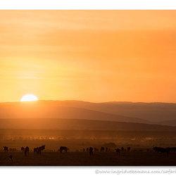 Gathering On The Mara Plains