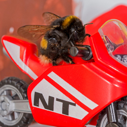 Bee rider@zoom