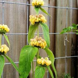 Een aparte bloem