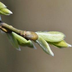 Begin van het voorjaar