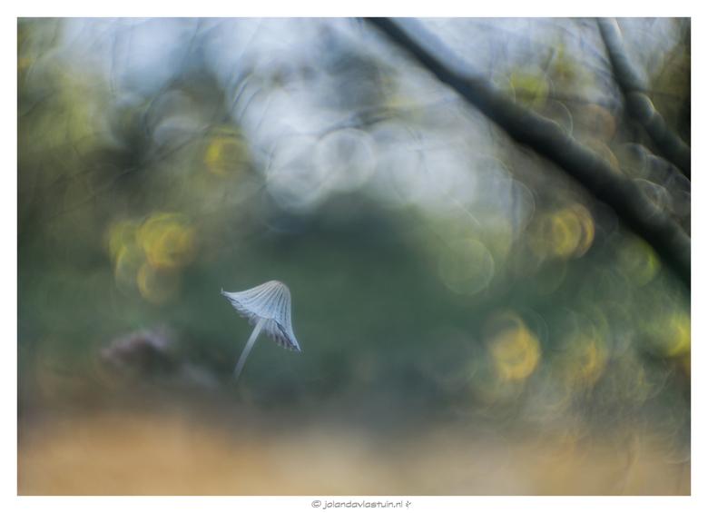 Under an old tree... - Hazenpootje. Gefotografeerd middels meervoudige belichting.
