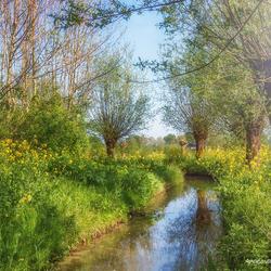 Natuur in de lente