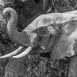Uganda - Up close and personal - Murchison national park