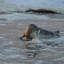 Jonge zeehond in zware storm