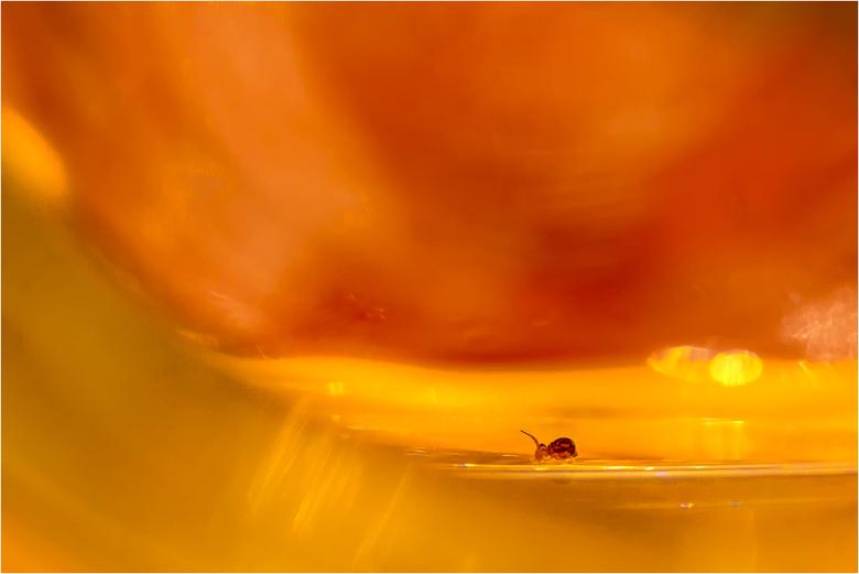 springstaartje - nietsvermoedend leek dit kleine beestje naar de rand van de waterval te lopen,<br /> heb hem gelukkig kunnen redden en weer veilig b