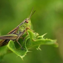 Lonely grasshopper..