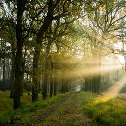 A Walk On Sunshine