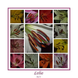 Lelie collage