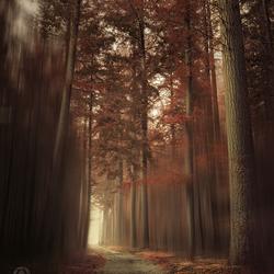 The odd pines