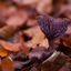 paars  tussen de bladeren