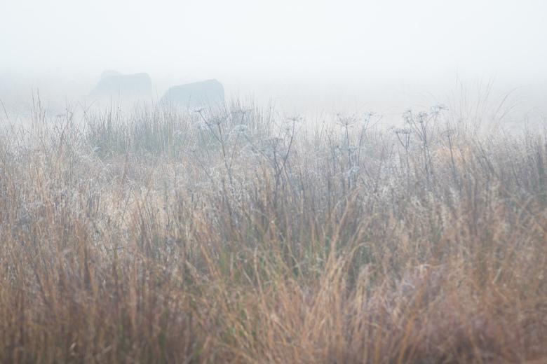Grazers in de mist - Mistige ochtend in de Hoge Venen waar natuurlijke begrazing wordt ingezet om het landschap te beheren.