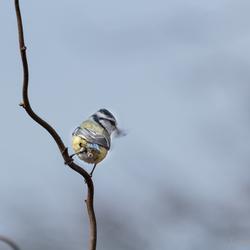 Preparing the nest