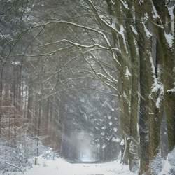Cold winters walk