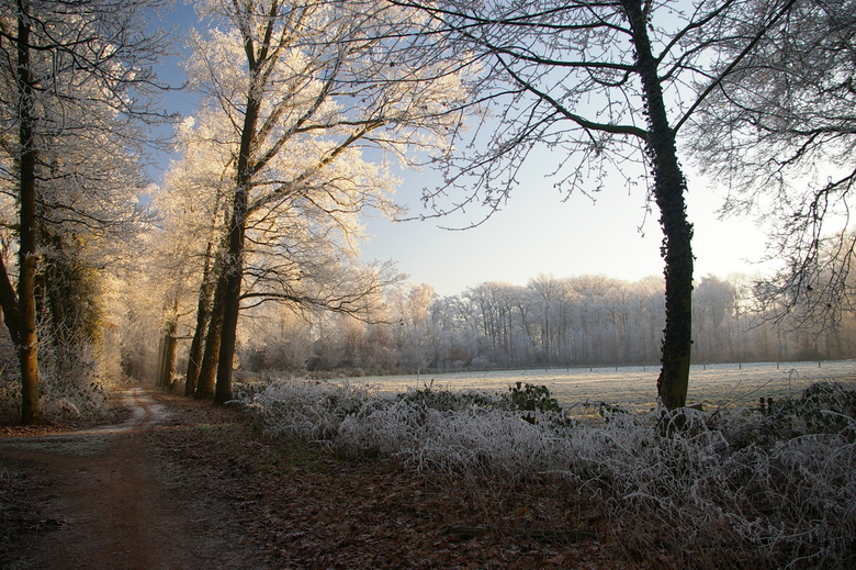 The beauty of the winter - gemaakt in de afgelopen kerstvakantie.<br /> <br />